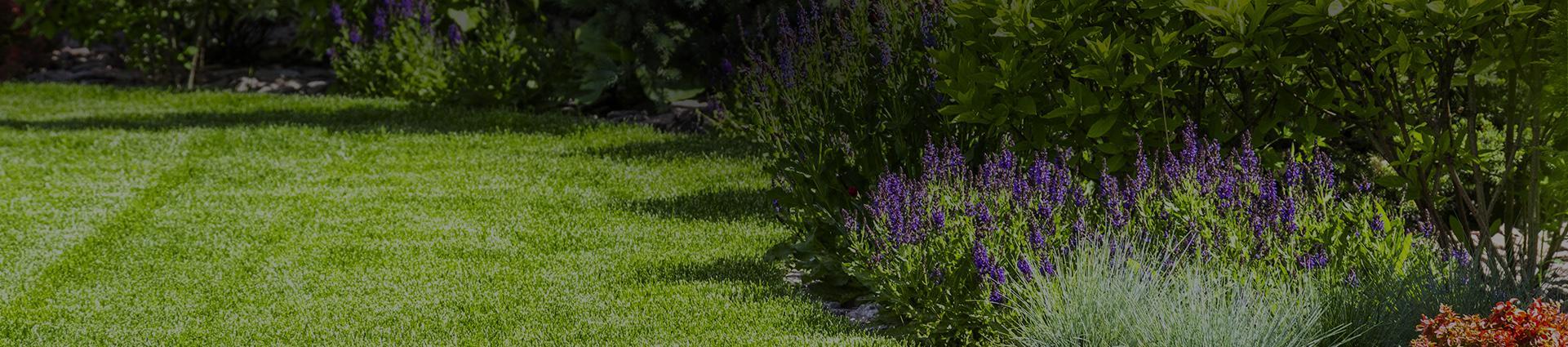 Ogród i skoszony trawnik