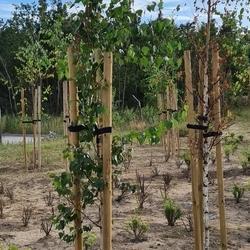 utrzymanie terenów zielonych 12