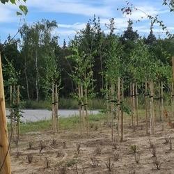 utrzymanie terenów zielonych 13